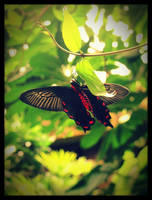 Black Butterfly by valaMS