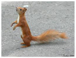 Begging Squirrel by Sinetaar