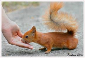 Squirrel Risk by Sinetaar