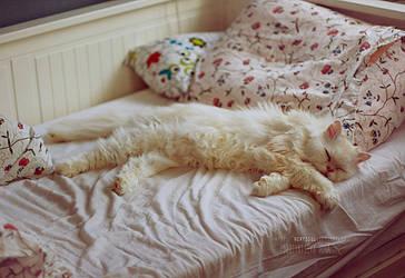 Morning Cat by NerySoul