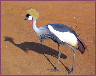 Crowned Crane II by Jenvanw