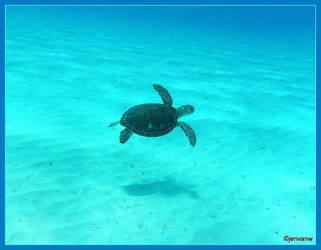 Turtle in Sea by Jenvanw
