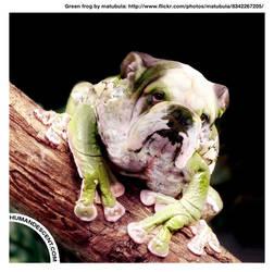 Ben the bullfrog by HumanDescent