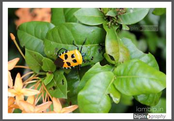 Unique Bug by bipinography