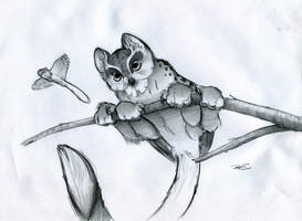 Arboreal Owl Faced Microgriffin by RobtheDoodler