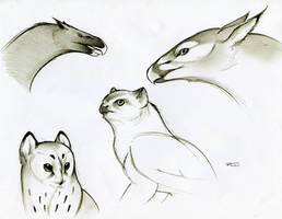 Various Griffins by RobtheDoodler