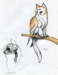 Owl Griffin skull anatomy by RobtheDoodler