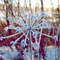 Frosty_nature by indrekvaldek