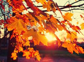 Golden sunshine by indrekvaldek