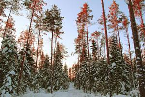 Winter wonderland by indrekvaldek