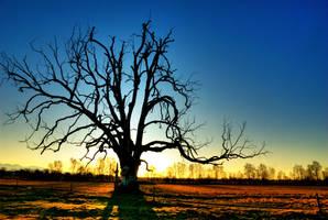 The Hangman tree by piotr-semberecki