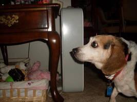 My Beagle, Snoopy by katiefoss
