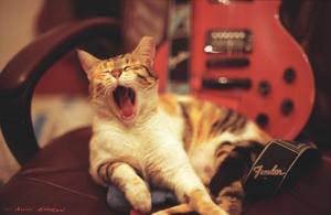 pupa yawn by avivi