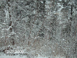 Snowy Branches by kandi