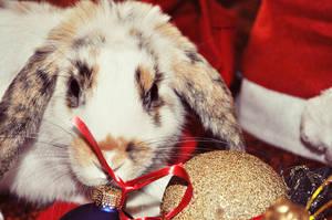Christmas bunny by nagomi09