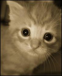 Big Eyes by mandiemoon