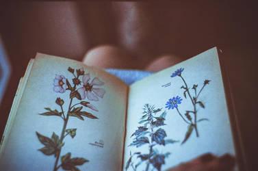 flowers by Mirrelley