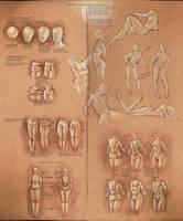 Simplify Human Anatomy guide by sakimichan
