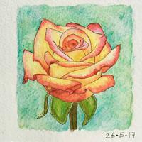 Rose Practice by AquaVarin