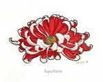 Red Chrysanthemum by AquaVarin