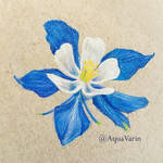 Columbine flower by AquaVarin