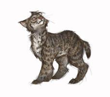 Bobcat Sketch by Sandora