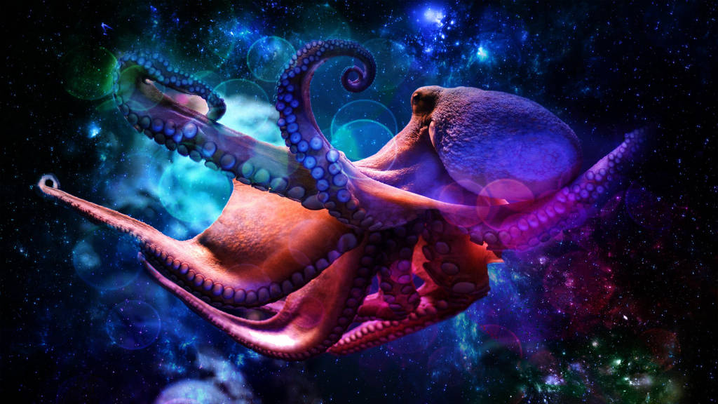 Octopus by Liv02