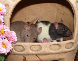 Rats by Artistic-Castaway