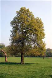 A Tree by sunlitsix