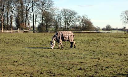 Horse by sunlitsix