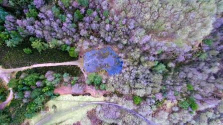 Purple Trees by sunlitsix