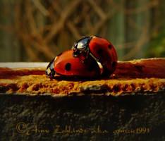 Ladybird Love by annzie1991