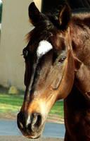 horse by shamma83
