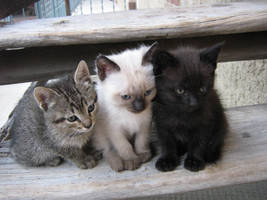 Cute Kitties by dl-stockandresources
