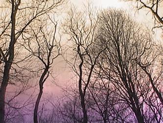 Trees Uninverted by ezo