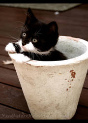 I grew a cat for yoou by xXAli-StarXx