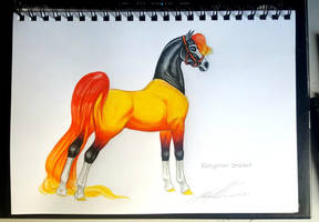 Impact Halter show by Carousel-Stables