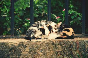 Kittens Hug by roxlittlevoice