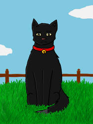 The Black Cat by Phoenix450