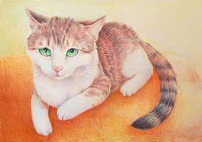 cat:3 by yeyeyy