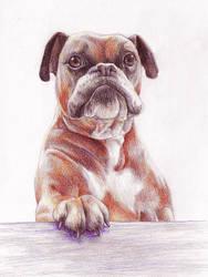 doggo:3 by yeyeyy