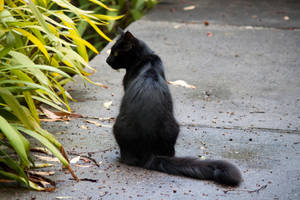 Sitting Black Cat Stock by CNStock