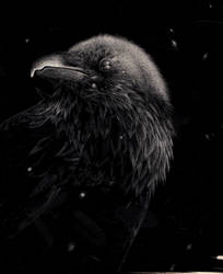 Raven by Room169