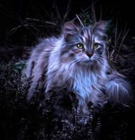 Kitty Cat by Bergkristalle