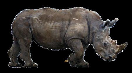 Rhino Cut Out Stock by jeffkingston
