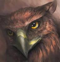 golden eyes by queenofeagles