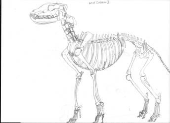 Wolf Skeleton by DragonLugia