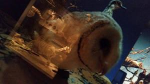 Creepy Masked Owl by Nyctimene