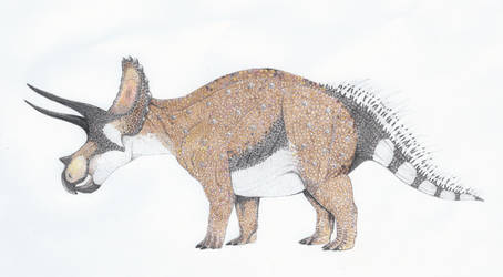 Triceratops horridus by yoult