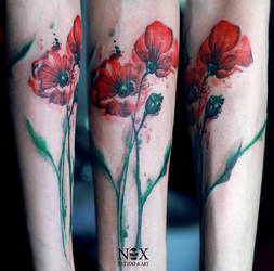 Poppies by mattynox